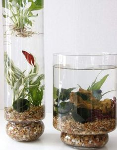 water garden inspirations from etsy