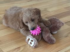 Amber eight weeks old July 2015