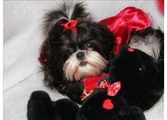 looks like a teddy bear!!