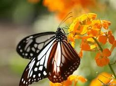 Image result for butterfly and flower