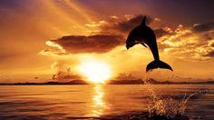 Fantasy Landscape Tiger | 10 Un meraviglioso delfino al tramonto