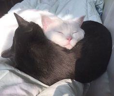 Pretty Animals, Cute Little Animals, Baby Animals, Funny Animals, Cat Couple, Cat Aesthetic, Cat Love, Cats And Kittens, Cute Cats