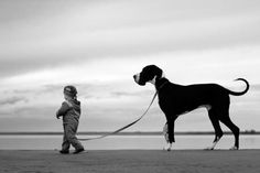Little boy, big dog!