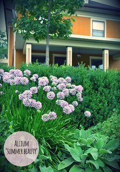 75 best planting design images in 2019 landscaping plant design rh pinterest com