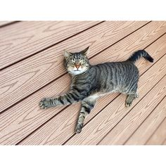 Make the puuuurfect excuse to enjoy your composite decking with 🐱 Our range of deck boards aren't only incredibly robust and long-lasting, they're also cat-friendly, requiring practically zero levels of maintenance! Timbertech Decking, National Cat Day, Decking Material, Composite Decking, Wood Grain, Hardwood, Zero, Cute Animals, Boards