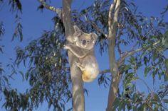 Wildlife & Environment - Kangaroo Island, South Australia