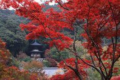 永観堂(禅林寺) : 【満足度200%】厳選99!京都観光おすすめスポット(Kyoto Japan) - NAVER まとめ
