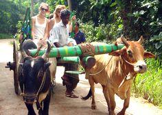 Vacaciones ¡Sri Lanka Sorprendente!
