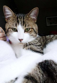 Cat - Alley cat - Martin