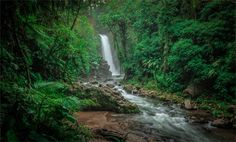 Costa Rica awaits.  Explore a cloud forest #paradise at @peacelodgeandwaterfallgardens. #CostaRicaExperts #CostaRica