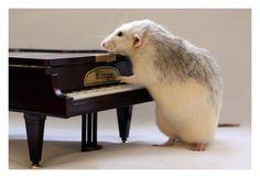 Ellen Van Deelen and Talented Rats and his piano