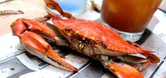 #OCCoupon - $12.50 for $25 Worth of Seafood & More at Fenwick Crabhouse, Fenwick Island, DE | Purchase by Sept 4 2015, good thru Oct 9 2015 | Click image, sign in, grab your #coupon today! #oceancitycool