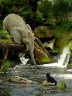 Petit chat, un éléphant ça trompe énormément..., mais fais-lui confiance !  /  An elephant tries to rescue a cat.