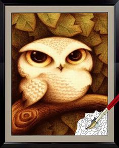 """Acrylic Paint by Number kit 40x30cm (16x12"""") Owl DIY Painting PH5013"""