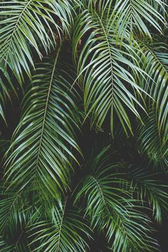 summer vibes | via Tumblr