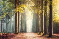 The forest by Bart Ceuppens on 500px.com