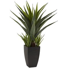 Agave Floor Plant in Black Planter (93,370 KRW) ❤ liked on Polyvore featuring home, outdoors, outdoor decor, outside planters, round planter, outdoor planters and black plastic planters