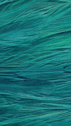 Feather Blue Bird Pattern #iPhone #5s #wallpaper