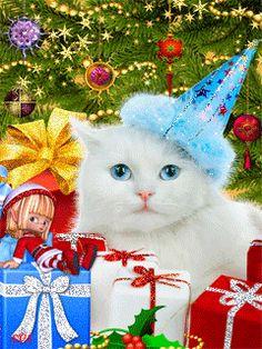 Белый котик - анимация на телефон №742434