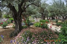 Garden of Gethsemane, Mount of Olives ~ this is where Our Savior sweat drops of His sinless Blood, while praying before He went to the cross to redeem us from the curse, and take the FULL WRATH of God the Father for us! The punishment WE DESERVED!