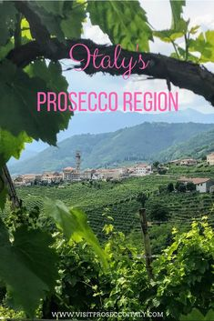 Did you know Italy's Prosecco region is one one hour from Venice making it the perfect day trip from Venice...or why not stay for a few nights. An ideal wine tasting tour from Venice, get to know Italy's under-discovered Prosecco region. Peeping through the vines. Day Trips From Venice, Regions Of Italy, Sparkling Wine, Prosecco, Getting To Know, Wine Tasting, Italy Travel, Did You Know, Vines