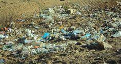 Lixo toma conta das margens do Rio Pajeú em Afogados da Ingazeira | S1 Notícias - A notícia passa primeiro aqui!
