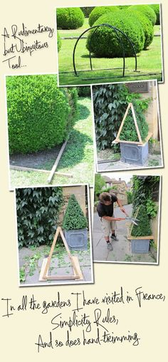 Boxwood trimming, hand is best according to Mrs. Charlotte Moss, and yes she would know!