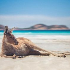 Cool kangaroo in Lucky Bay Photo by Thibault Bunoust -- National Geographic Your Shot Australia Photos, Australia Travel, Western Australia, Perth, Animals And Pets, Cute Animals, Wild Animals, National Geographic Animals, Happy Australia Day