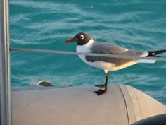A visitor on the Dinghy, Liming with the rest of us!
