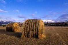 Making hay while sun shines.