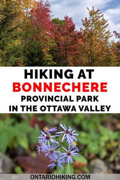Bonnechere Provincial Park is a great place to go hiking in the Ottawa Valley. Hike the McNaughton Trail in Bonnechere Park or many surrounding paths. Beautiful Places To Visit, Cool Places To Visit, Canadian Travel, Canadian Rockies, Ottawa Valley, Travel Goals, Travel Advice, Travel Guides, Travel Tips