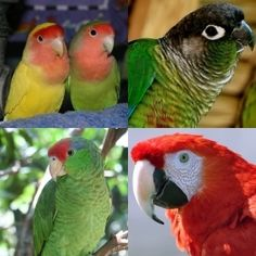 Want a pet bird? There are so many to choose from!  Choosing the best pet bird is very important when it comes to both you and your new bird's ultimate happiness and well-being. Mismatched birds and owners land many parrots in bird rescues around the world.