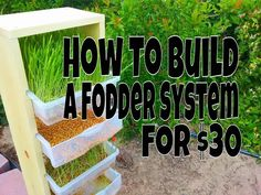 How To Build A Fodder System For Chickens, Rabbits Or Other Animals