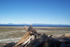 Tide Flats at Miracle Beach Provincial Park in Black Creek ~BC, Vancouver Island