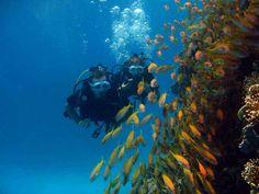 Unsere deutsche Tauchbasis bietet Tauchausflüge in Hurghada,Wählen Sie von dem was Sie wollen: Schnuppertauchen, Tauchkurse, Spezialkurse,Oder schauen Sie Hurghada Grand Aquarium.