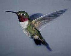 http://kathyh.hubpages.com/hub/Hummingbirds-In-Our-Yard