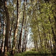 Il sole tra gli alberi, il mio Giardino Zen!