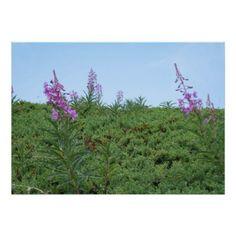 Purple Flowers - poster - decor gifts diy home & living cyo giftidea