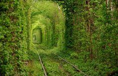 リウネという場所にある緑に包まれた線路「Tunnel of love」(ウクライナ)