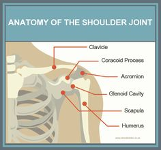 Anatomy of the Shoulder Joint Keep your shoulders healthy