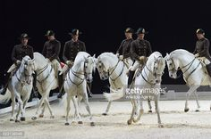 Horse riders from the Spanish Riding School of Vienna perform during their Anniversary tour in London United Kingdom on November 10 2016 The. All The Pretty Horses, Beautiful Horses, Spanish Riding School Vienna, Lippizaner, Lipizzan, Horse Coat Colors, Horse Dance, Dressage Horses, Arabian Horses
