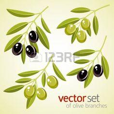Vector conjunto de ramas de olivo Foto de archivo
