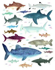 Shark Shiver Print