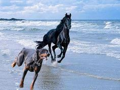 DOBERMAN PINSCHER Found on internet Of course it's photo shopped - We just liked the picture! .jpg (960×720)