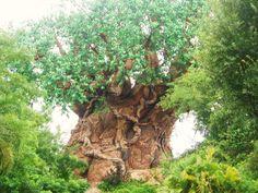 Animal Kingdom Walt Disney World Florida Disney World Florida, Disney Parks, Walt Disney World, Vacation Places, Vacation Spots, Birthday Tree, Happy Birthday, Disney Garden, Magical Home