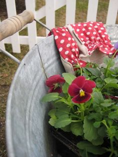 how pretty this red flowers in the silver bucket look