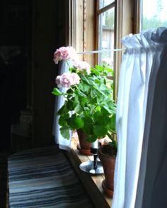 Geraniums - mandatory in any Swedish log cabin window!