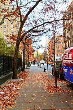 New York City, NYC leaves, foliage.