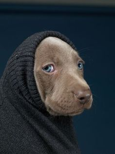 I like this mysterious look. This pup manages to pull it off very well and really what is mysterious about a puppy.