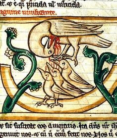 Illuminated Manuscripts Medieval Letter M In illuminated manuscripts // Pelican